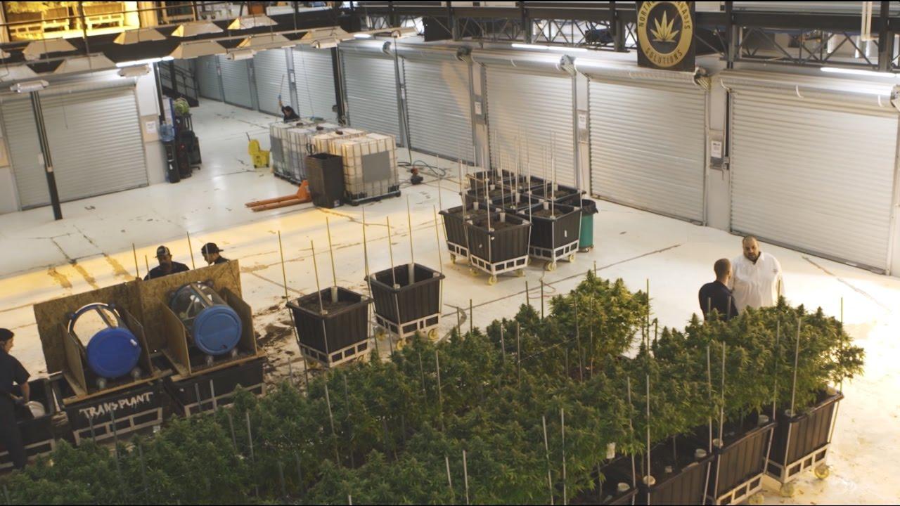 "Berner – ""Marijuana Mania"" Episode 3: Seattle [Video]"