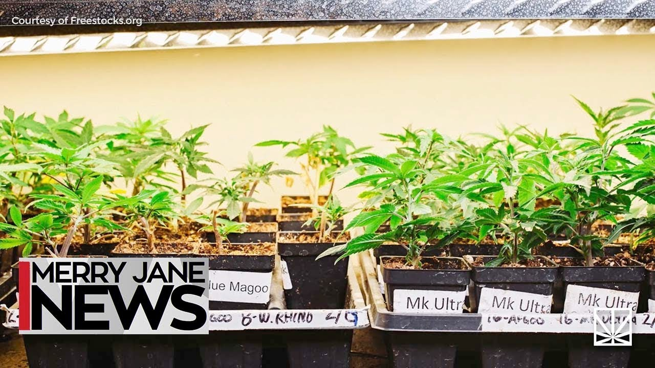 How to Find the Perfect Marijuana Strain