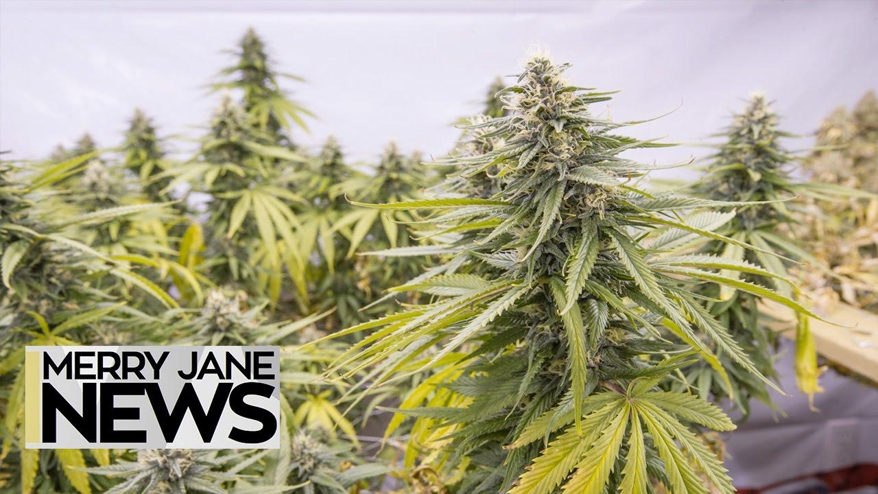 Illinois' Marijuana Legalization Bill Everything You Need to Know