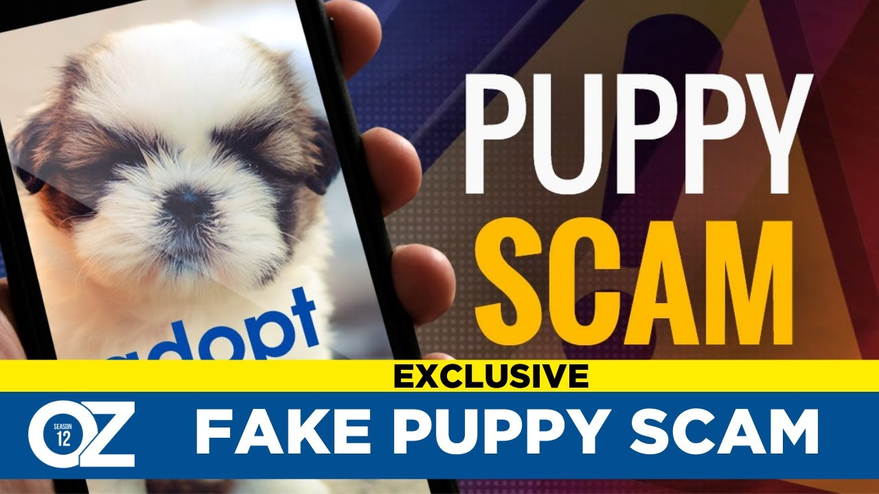 Fake Puppy Scams : Stealing Your Money And Your Covid Puppy Dreams