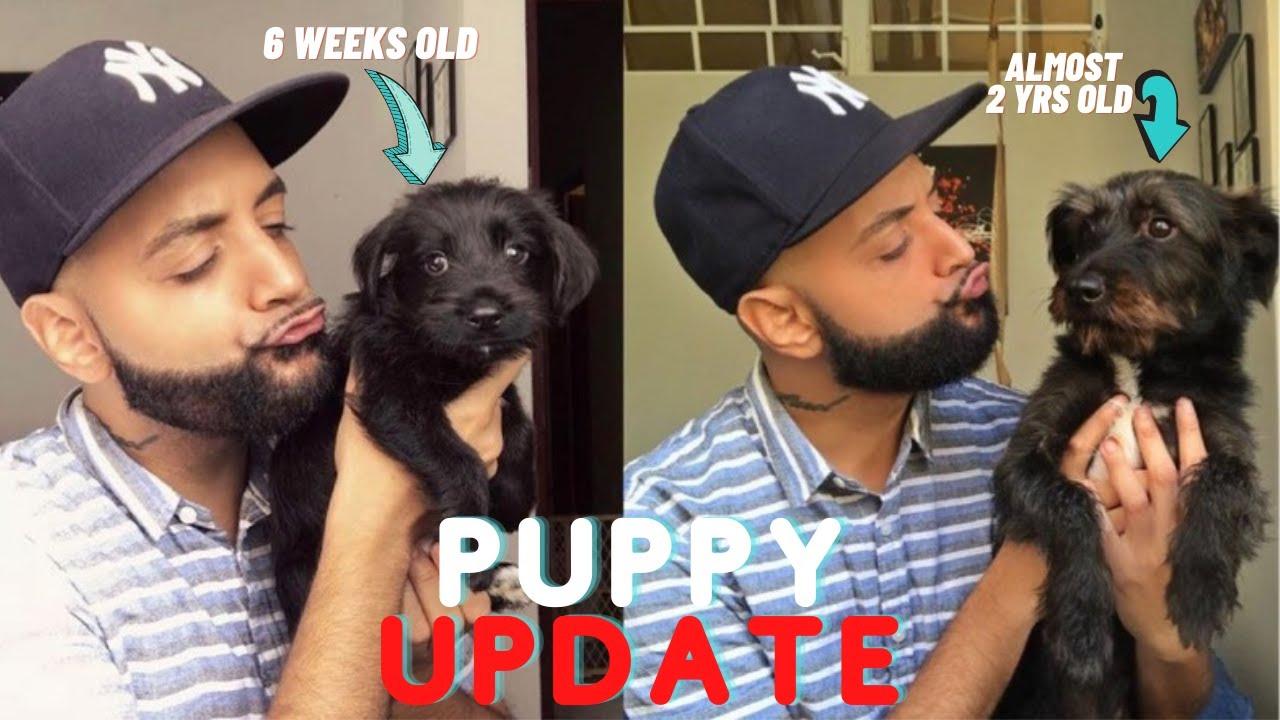 Puppy Update (GOOD & BAD) | Vlogmas Day 4