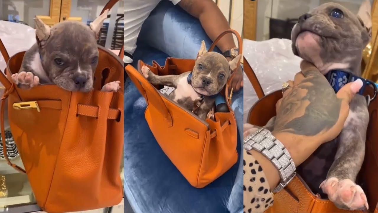 Reality Star Masika Kalysha Uses Her Birkin Bag as a Dog Carrier