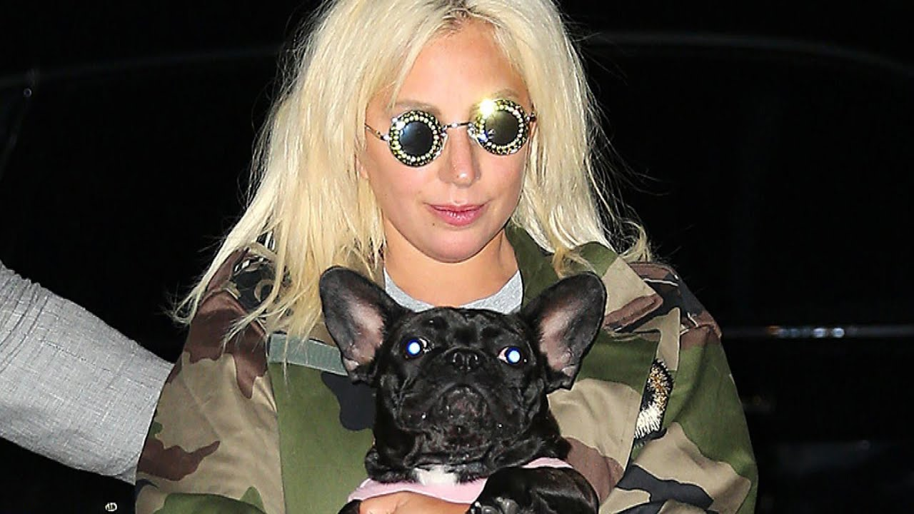 Lady Gaga Dognapping: NEW DETAILS on Why Someone Would Steal Her Pets